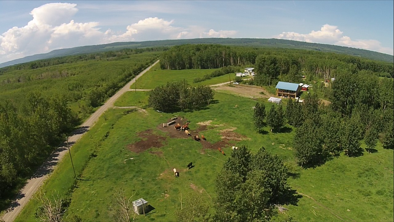 1200 Willis Road > Chetwynd | 630 Acres | 120 Acres Hay | Runs 60 Cow/Calf Pairs | Great Recreational Property or Horse Ranch