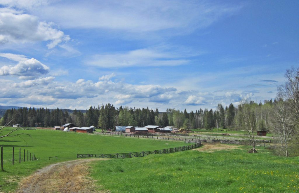 Cinch Buckle Bar Ranch  > Quesnel | 700 Acres | Cattle Ranch | 2 Residences | 70 Acres Hay | Gravity Fed Water | Runs 100+ Mature Cows