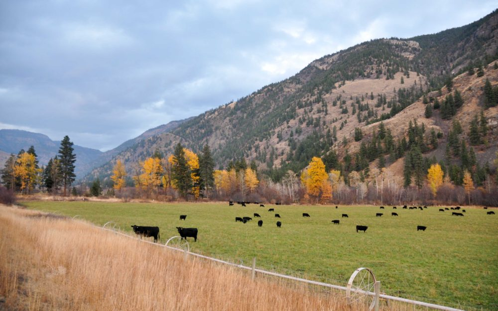 Wayhome Ranch >Olalla, BC | 212 Acres | High Producing Cattle Operation | 2 Residences | 50×80 Dream Shop | Cattle Handling System | 6 Stall Horse Barn
