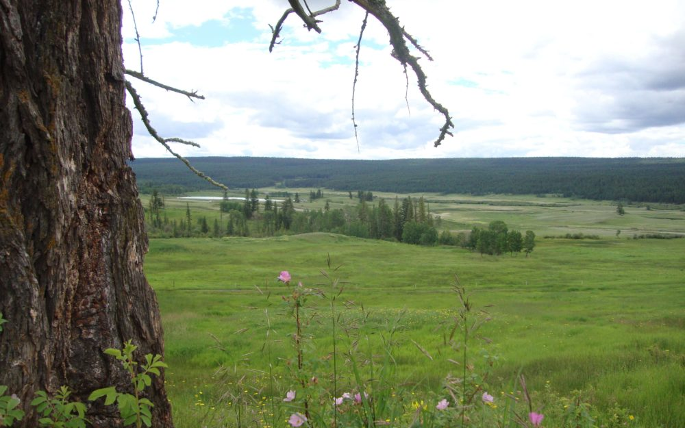 144 Mile Ranch, San Jose Cattle Co. Ltd.  > 1181 Acres   750 Acres Grassland   200 Acres Hay   2 Residences   Crown Grazing Licence/350 AUM's   San Jose River Frontage   Timber Value