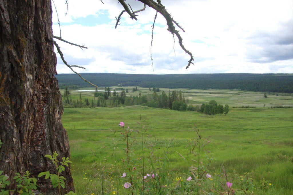 144 Mile Ranch, San Jose Cattle Co. Ltd.  > 1181 Acres | 750 Acres Grassland | 200 Acres Hay | 2 Residences | Crown Grazing Licence/350 AUM's | San Jose River Frontage | Timber Value