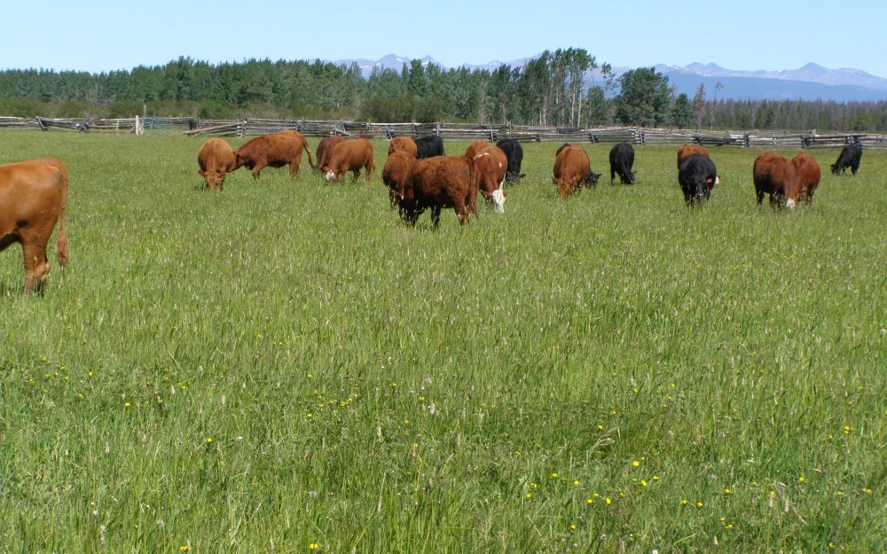 Guichon Creek Ranch > Anahim Lake, BC | 1500 Acres Freehold Land / 2500 Acres Lease Land | 3 Cattle Yard Sites | Irrigated Hay Production | Crown Range Out Gate